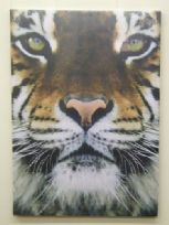 Tiger Face Large Canvas Print